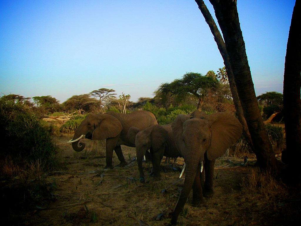 Voyager en toute sécurité avec safarivo