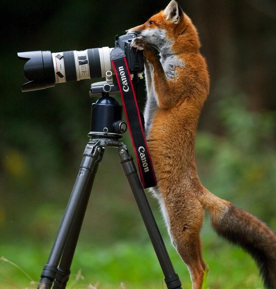 Ecole de photographie les deux grandes tapes franchir for Statut photographe